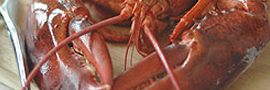 affordable Maine live lobster